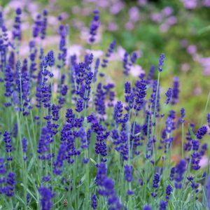 The Best Essential Oil To have in your first aid kit